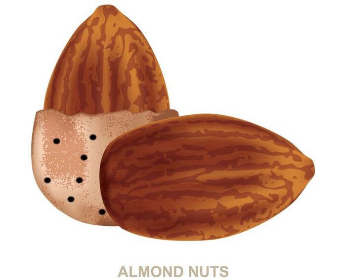 Close up of couple of almonds on white background.