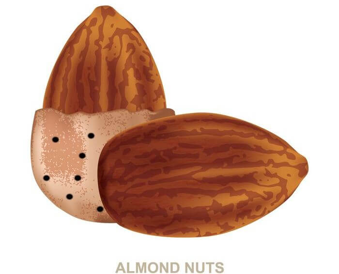 Close up of a couple of almonds.